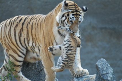 lady-or-the-tiger-alt.jpg